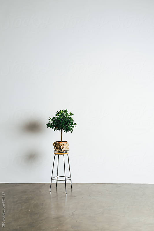 Plant against blank wall by Simone Becchetti for Stocksy United