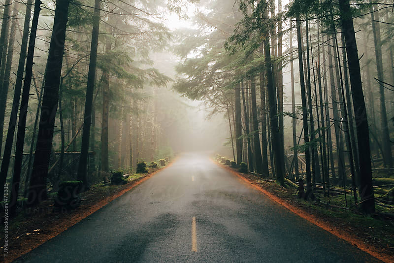 A foggy road running through the woods by TJ Macke for Stocksy United