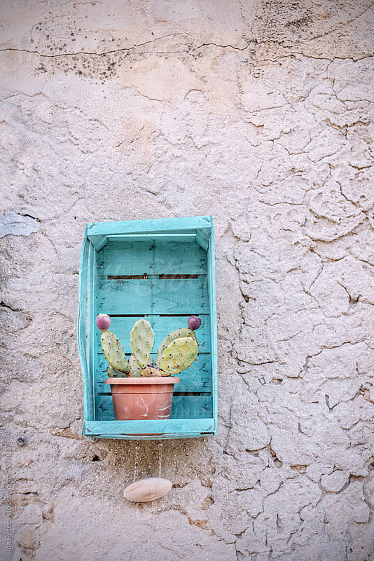 Objects: turquoise painted crate with cactus as wall decoration by Ina Peters for Stocksy United