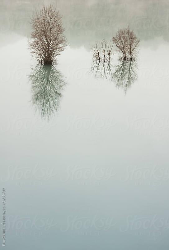 Lake landscape In The Morning Mist