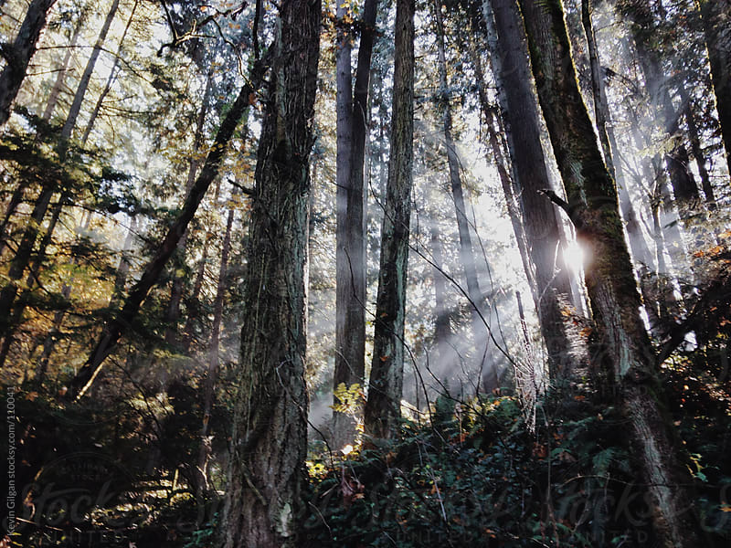 Light Through Forest by Kevin Gilgan for Stocksy United