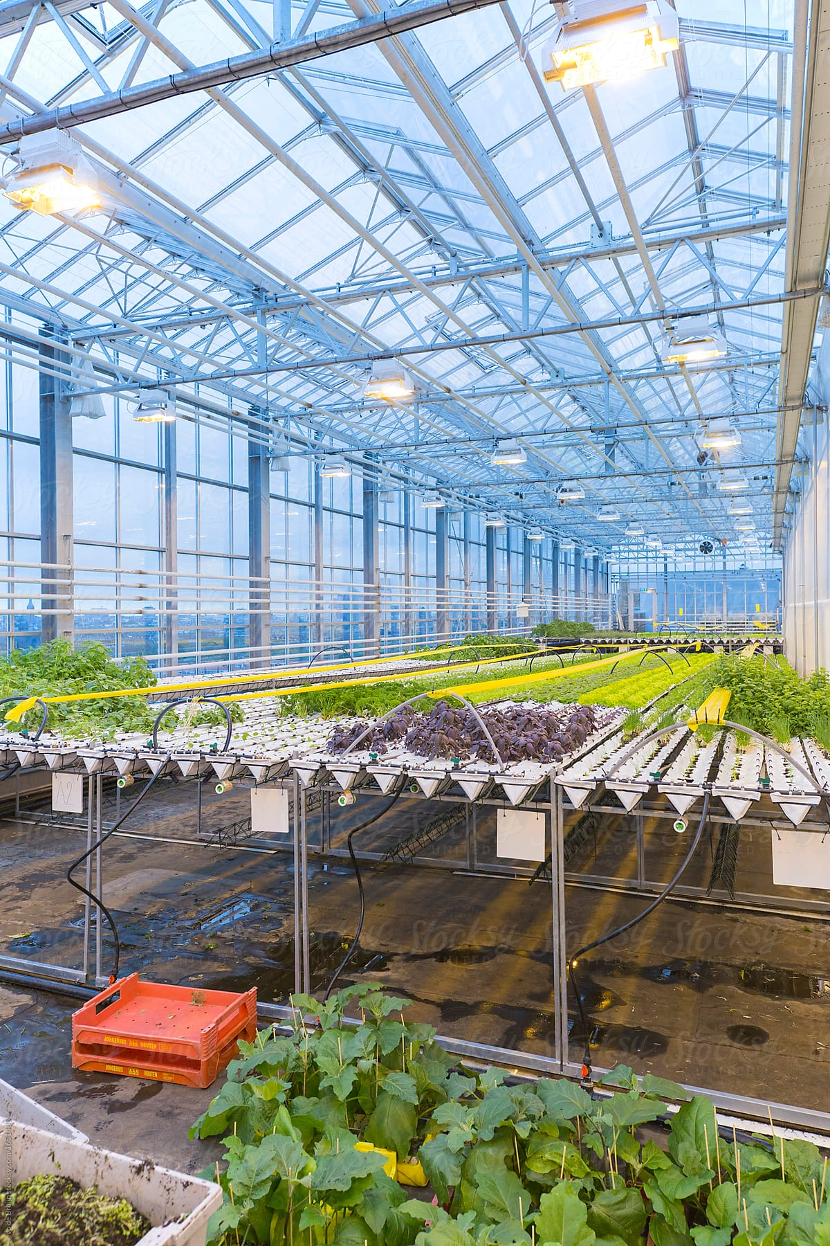 Superieur Photo Of A Modern Greenhouse In Which Vegetable Plants Are Cultivated By  Ivo De Bruijn For