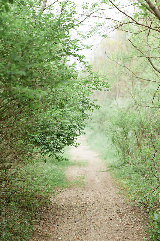 A trail bursting with green buds in the spring time by Amanda Worrall for Stocksy United