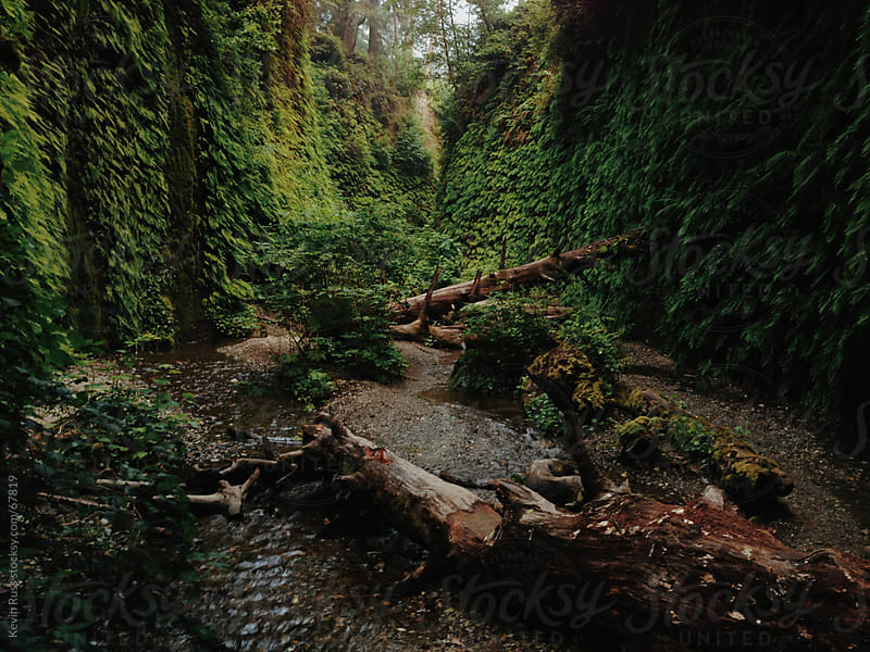 Fern Canyon by Kevin Russ for Stocksy United