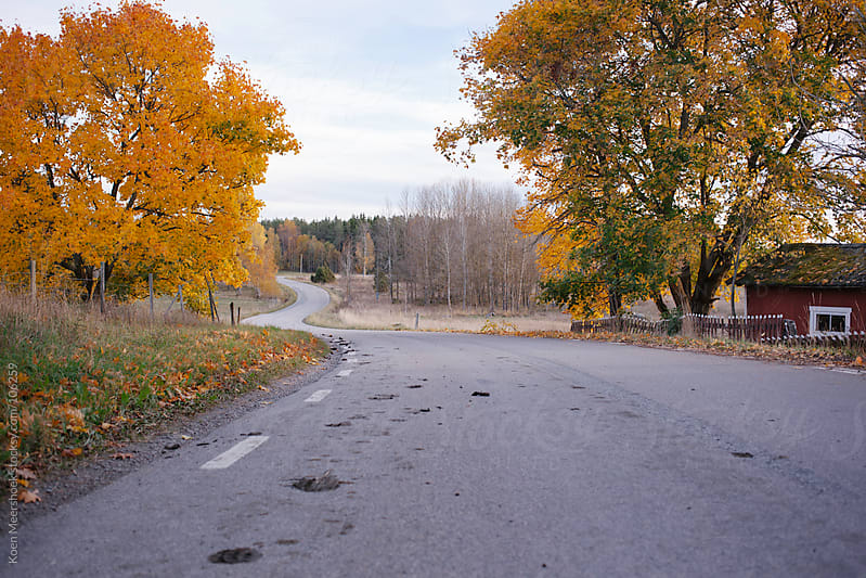 Empty road in the countryside with colorful trees on both sides. by Koen Meershoek for Stocksy United