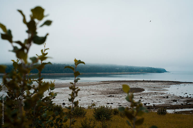 Foggy Maine coast by L&S Studios for Stocksy United