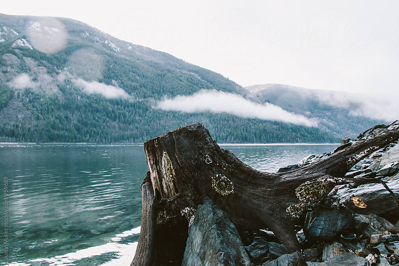 Weathered stump on a rocky shoreline.  by Justin Mullet for Stocksy United