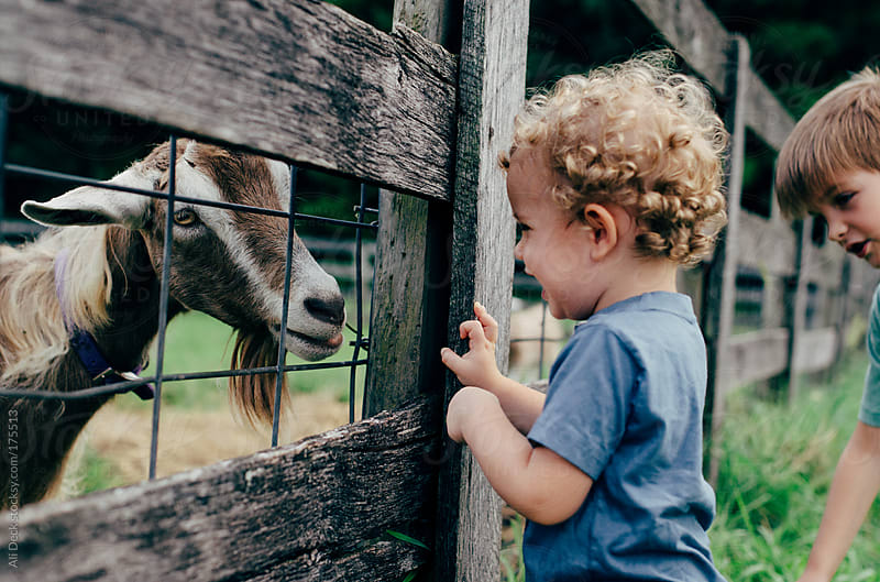 A Goat Makes a Little Boy Giggle by Ali Deck for Stocksy United
