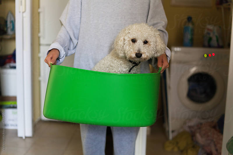 Woman holding white poodle in a green trough  by Marija Mandic for Stocksy United