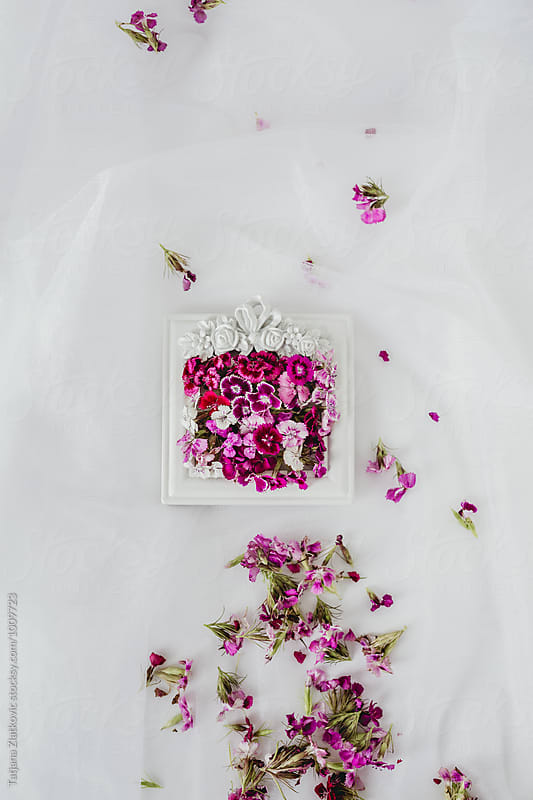 Frame with flowers by Tatjana Ristanic for Stocksy United