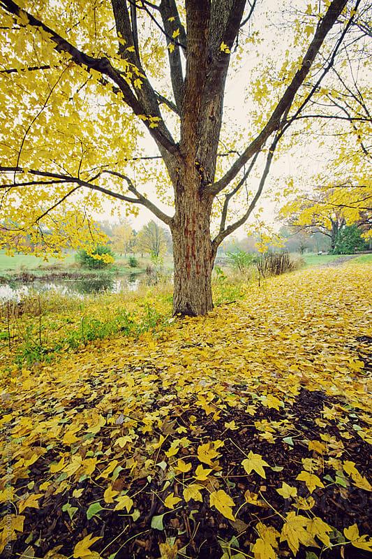 Leaves, Leaves by Brian Koprowski for Stocksy United