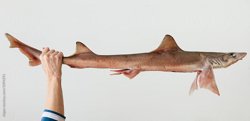 Woman fishmonger holding a dogfish shark by kkgas for Stocksy United
