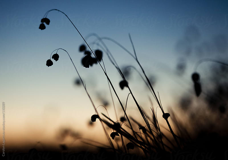 Sweet silhouette weed against the morning sky by Carolyn Lagattuta for Stocksy United