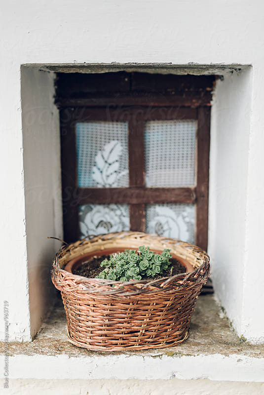 Wicker basket with a plant rural in the window by Jordi Rulló for Stocksy United