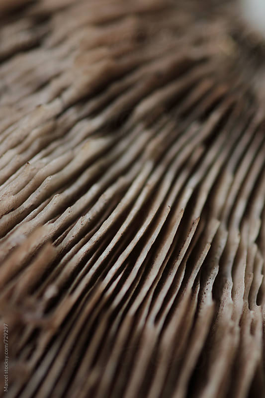 Detail of the underside of a mushroom by Marcel for Stocksy United