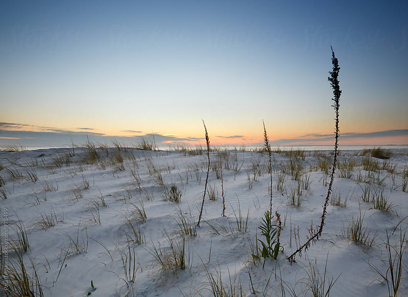Gulf Coast Sunset by Paul Tessier for Stocksy United