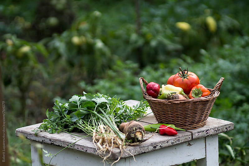 Fall vegetables in a basket by Viktorné Lupaneszku for Stocksy United