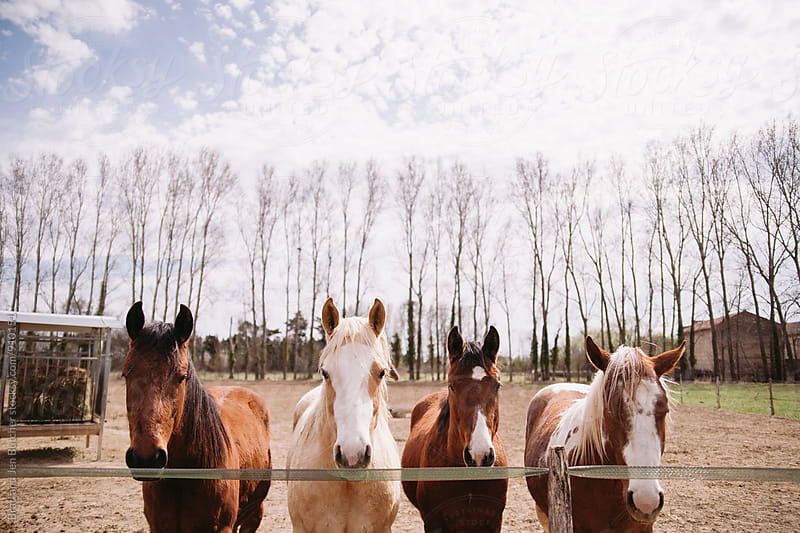 Horses at fence  by Brad and Jen Butcher for Stocksy United