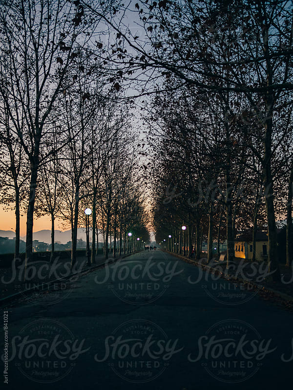 Boulevards with trees at sunset by Juri Pozzi for Stocksy United