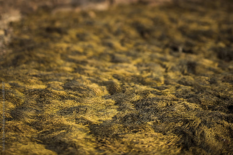Detail of Moss by Isaiah & Taylor Photography for Stocksy United