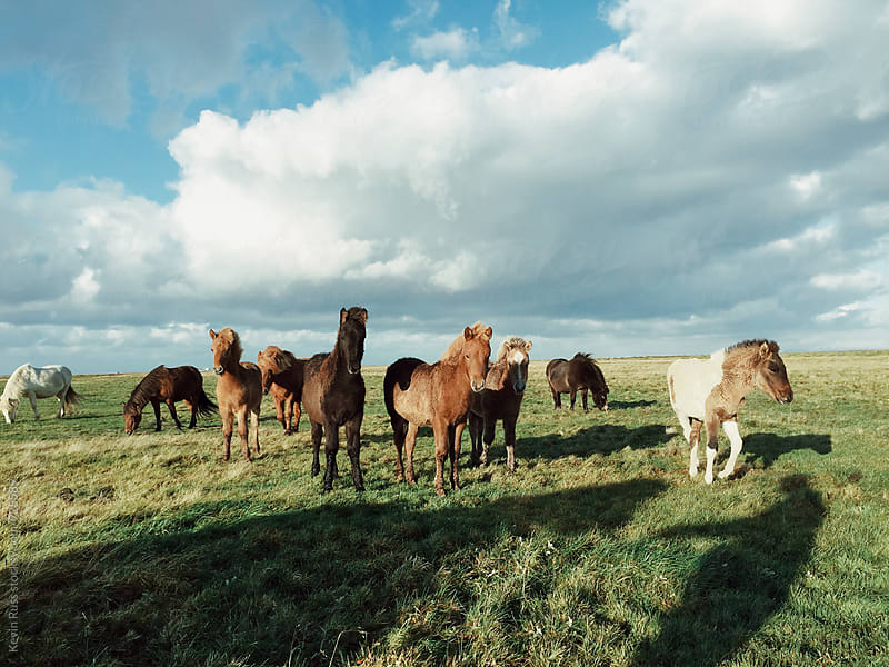 Wild Horses in a Field by Kevin Russ for Stocksy United