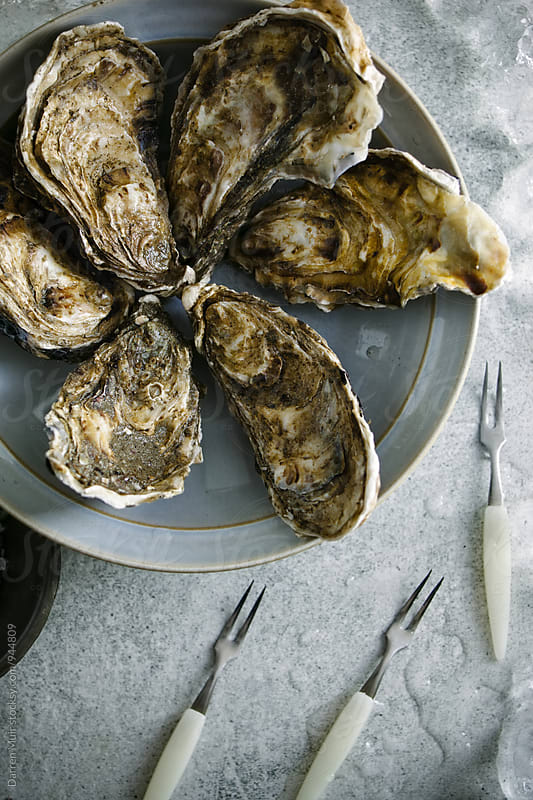 Oysters: A bowl of unopened oysters. by Darren Muir for Stocksy United