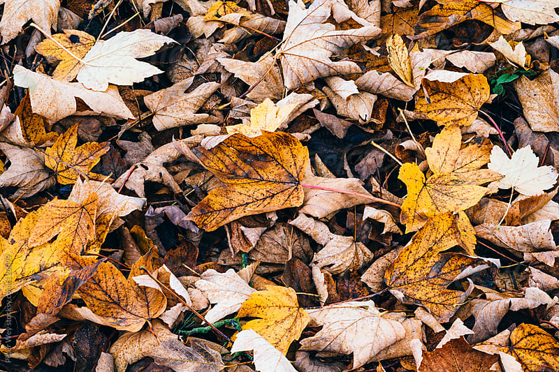 autumn leafs on the ground by Peter Wey for Stocksy United