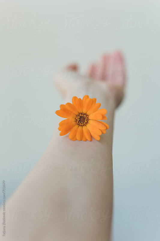 Marigold flower on a hand by Tatjana Ristanic for Stocksy United