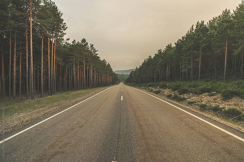 a rural road through the forest by Javier Pardina for Stocksy United