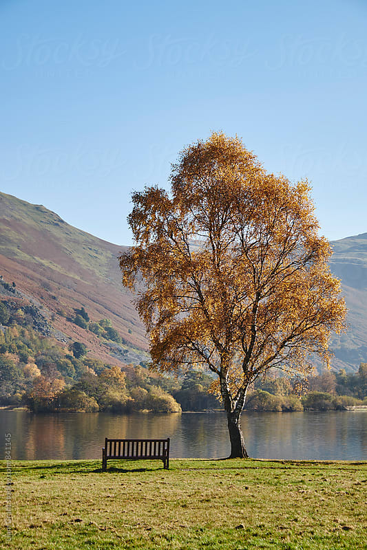 Bench and autumnal colour. Ullswater, Cumbria, UK. by Liam Grant for Stocksy United