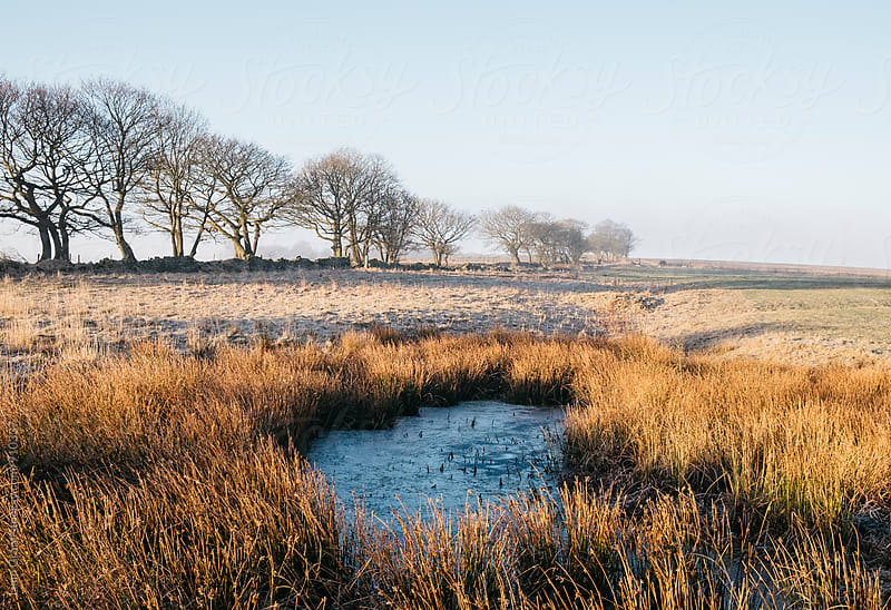 Frozen water and reeds lit by the sunrise. Derbyshire, UK. by Liam Grant for Stocksy United