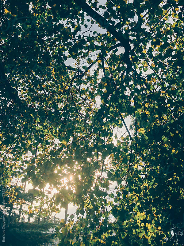 Sun flares through autumnal leaves by Borislav Zhuykov for Stocksy United