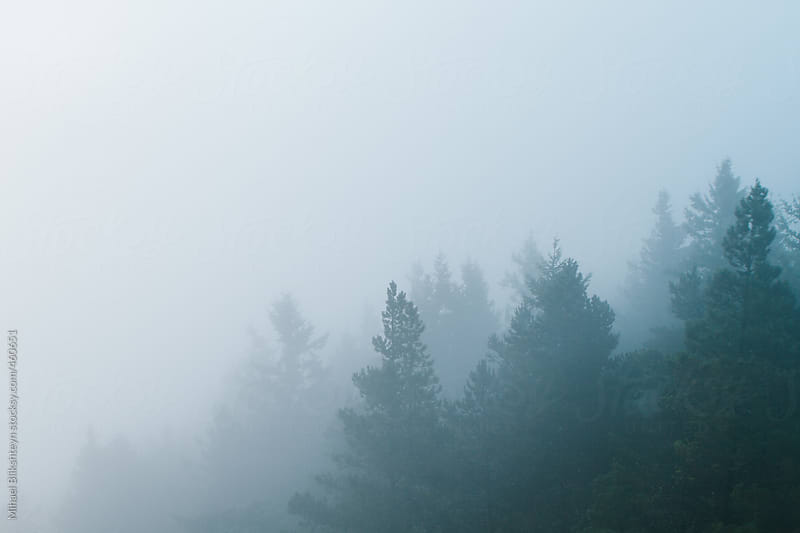 Aerial view of spruce trees eneloped in thick fog by Mihael Blikshteyn for Stocksy United