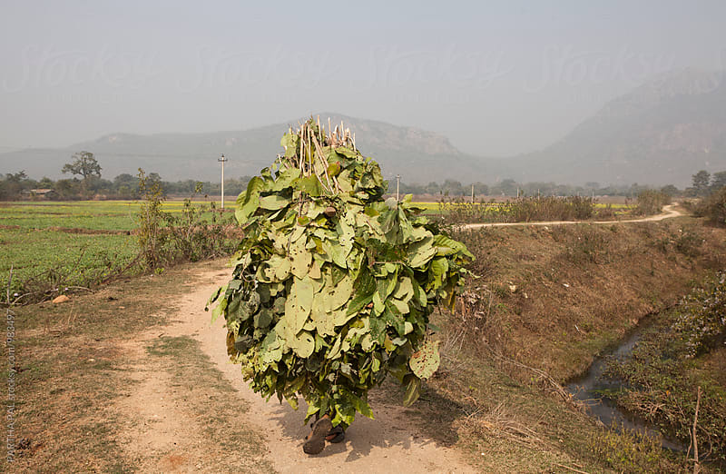 A man carrying leaves for domestic use by PARTHA PAL for Stocksy United