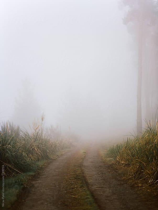 Foggy pathway. by Nirav Patel for Stocksy United