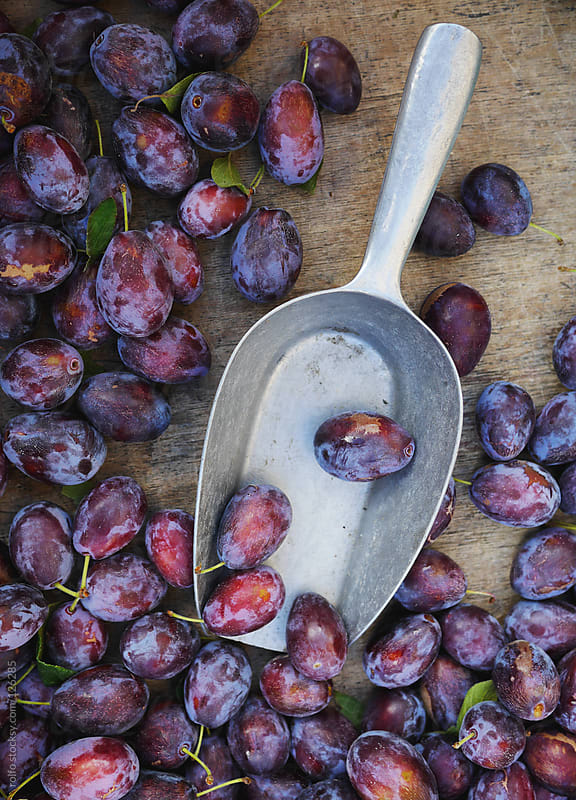 Organic plums with a metal scoop by rolfo for Stocksy United