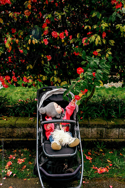 baby in a stroller reaching for flowers by Treasures & Travels for Stocksy United