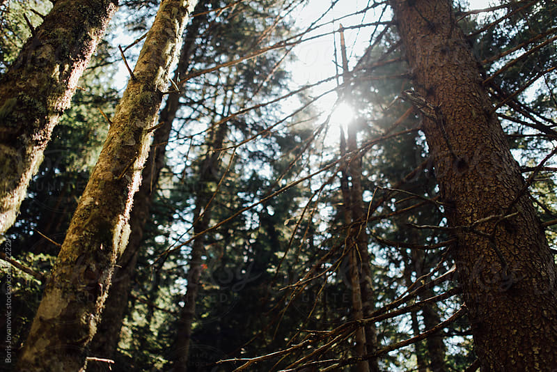 Sun shining through the trees deep in the forest by Boris Jovanovic for Stocksy United