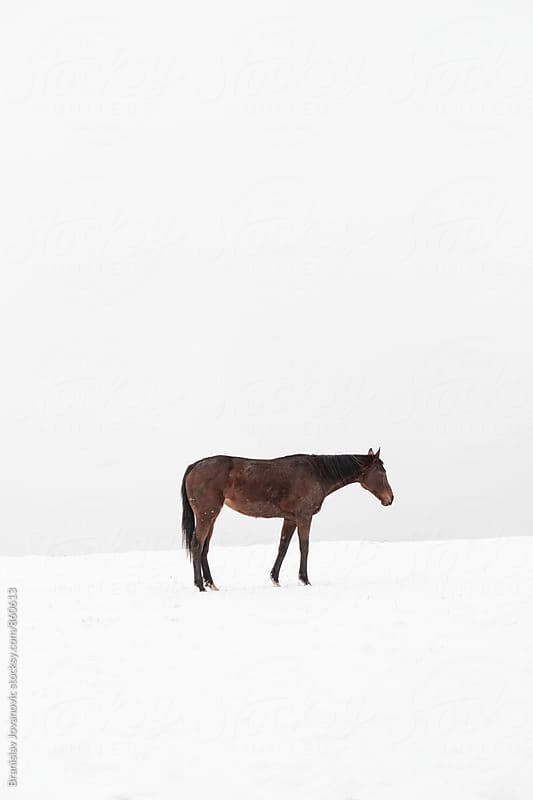 A Horse on the Snow by Branislav Jovanovic for Stocksy United