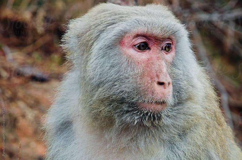 monkey in a island by Xunbin Pan for Stocksy United