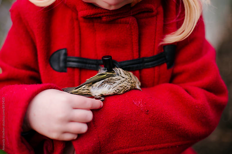 Close up of a Little Girl With  Dead Bird Resting on her Sleeve by Amanda Voelker for Stocksy United