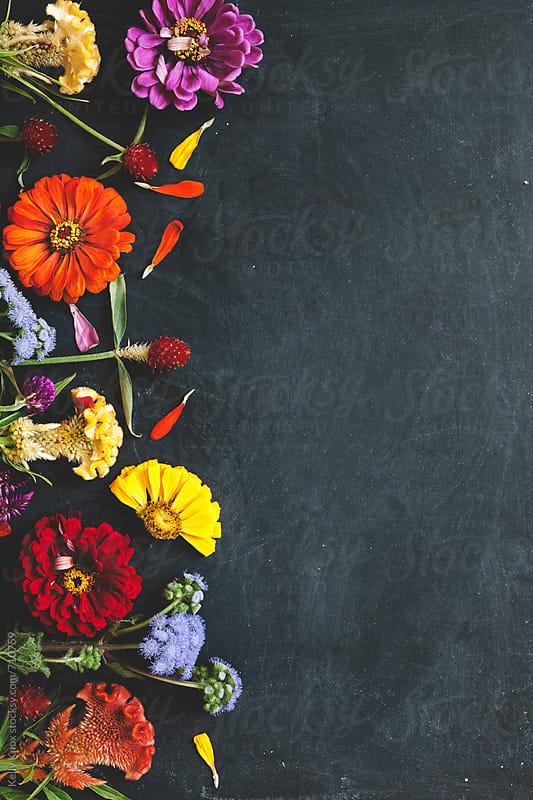 colorful flowers scattered on a chalkboard background by Kelly Knox for Stocksy United