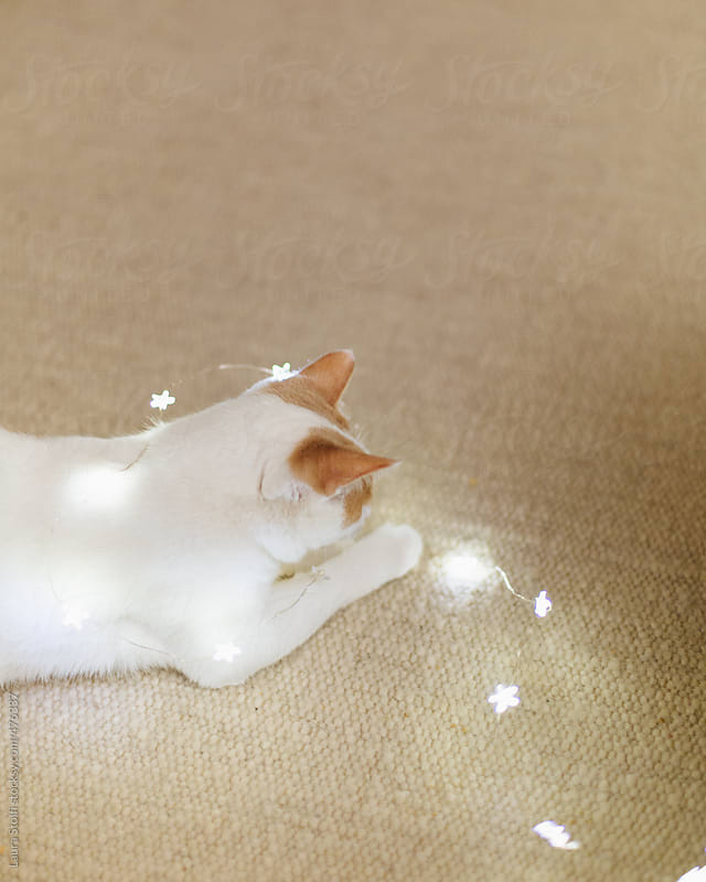 White and ginger cat plays with christmas lights on carpet by Laura Stolfi for Stocksy United