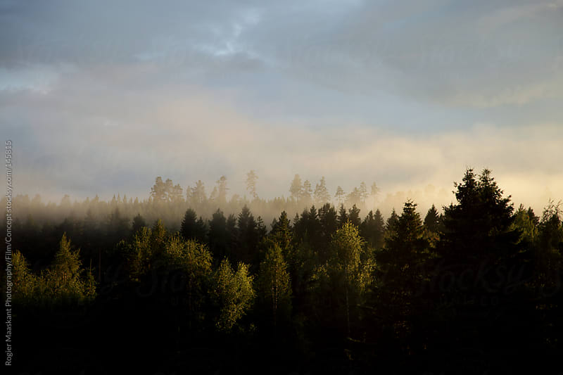 Sunset over Swedish forest by Rogier Maaskant Photography/Film/Concept for Stocksy United
