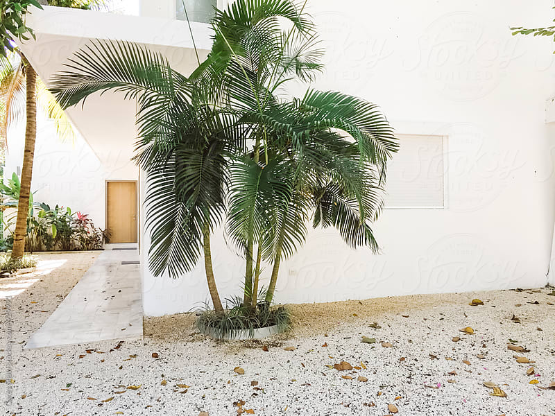 White modern house with tropical greenery by Carey Shaw for Stocksy United