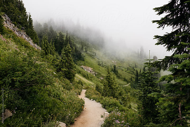 Foggy Trail by Joe Dodd for Stocksy United