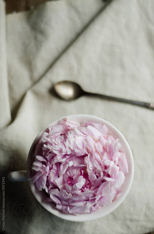 flower in a cup by Crissy Mitchell for Stocksy United