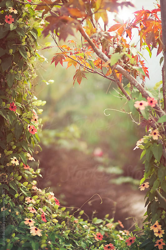 A frame of autumnal foliage in sunshine by Rachel Bellinsky for Stocksy United