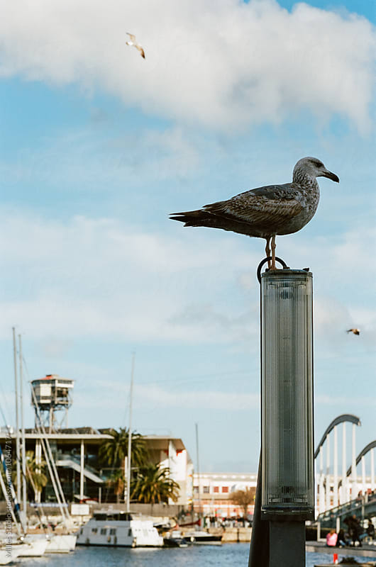Seagull at Port by Milles Studio for Stocksy United