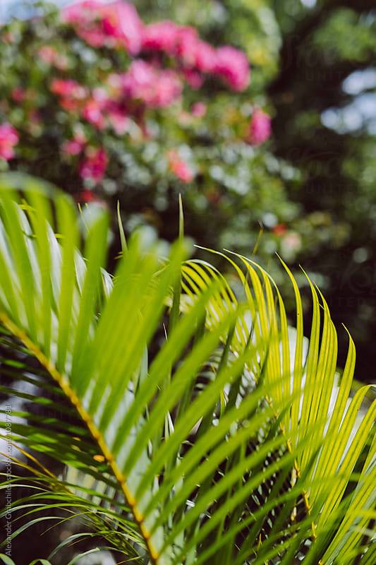 Tropical Green Natural Background by Alexander Grabchilev for Stocksy United